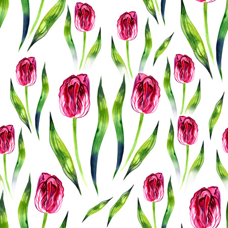 phytology: Beautiful delicate purple tulip. Watercolor Illustration on white Stock Photo