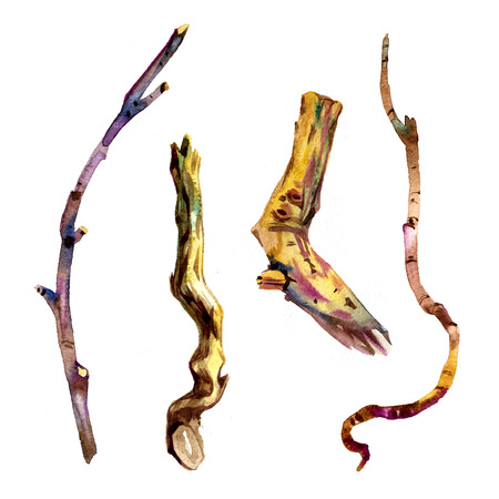 Watercolor dry tree branches set closeup isolated on white background.