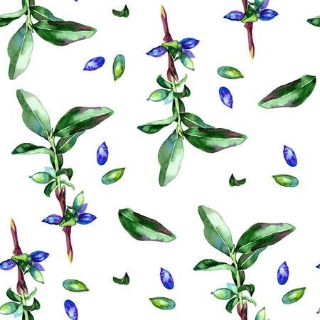 honeysuckle: Watercolor honeysuckle berries illustration pattern on white background