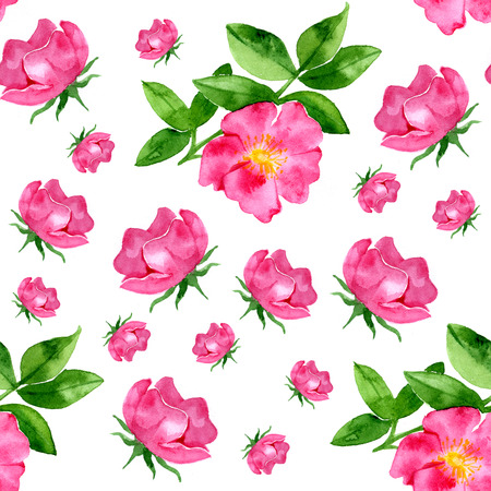 wild rose: watercolor seamless pattern with wild rose on white