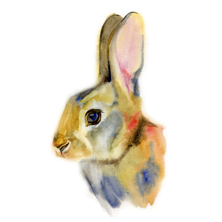 leporidae: Isolated realistic watercolor rabbit on white background
