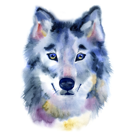 Watercolor wolf head. Front view. Hand painted illustration