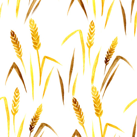 winter wheat: Seamless watercolor pattern with ear of wheat on the white background, aquarelle.