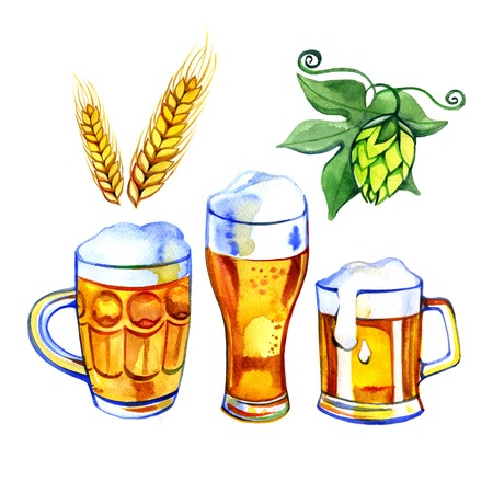 pint glass: pint of beer, glass mug, hops and malt hand drawn in watercolor