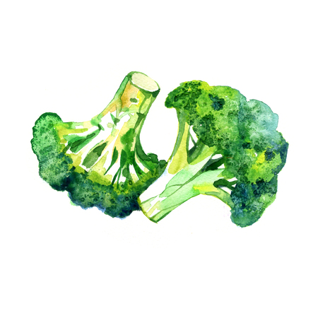 Watercolor vegetable broccoli closeup isolated on a white background. Hand painting on paper Banco de Imagens
