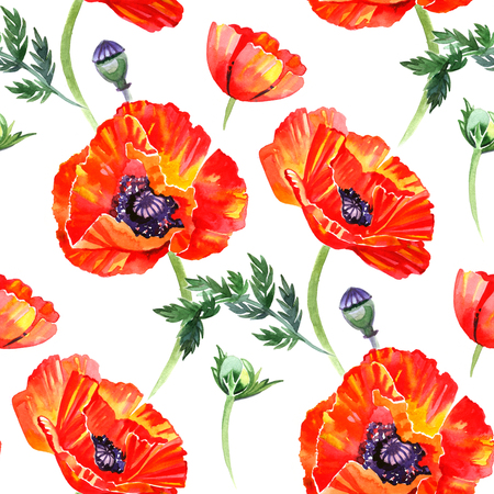 opium poppy: Watercolor pattern with red poppies on white background.