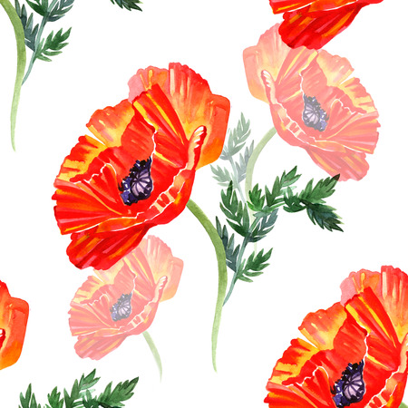 Watercolor pattern with red poppies isolated.