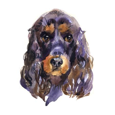 English cocker spaniel. Animal, dog. Watercolor illustration isolated on white background