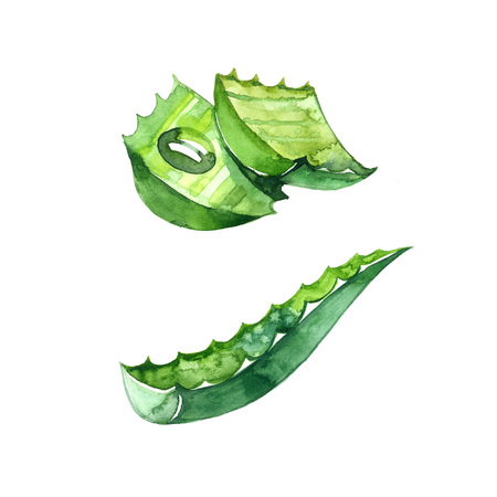 Aloe vera. Hand drawn watercolor painting. Illustration on white background. Stok Fotoğraf