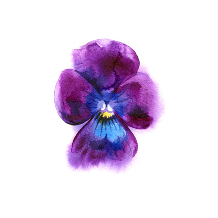 Watercolor painting of pansy flower. Can be used as a greeting card for background, birthday, mothers day and textile patterns. Background for web pages, wedding invitations, wallpaper.