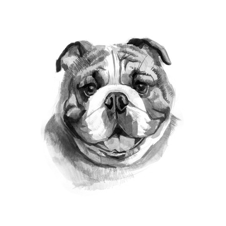 Colored English bulldogs head. Watercolor picture.