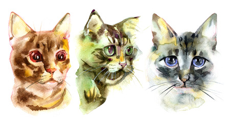 foxy: European shorthair cat red tabby, kitten lies on white background, isolated, hand draw watercolor painting.