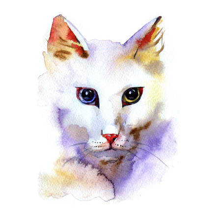 torn edge: Angora cat portrait watercolor painting on white background
