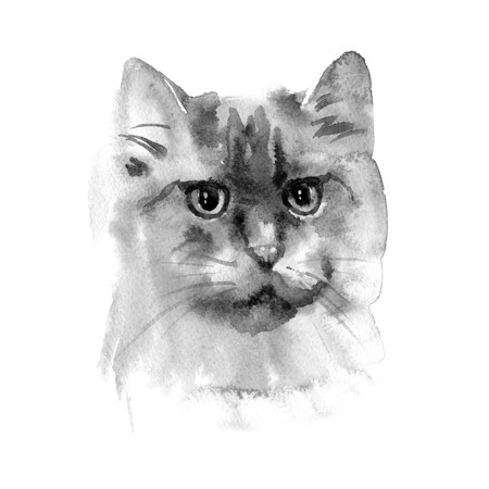 Hand drawn watercolor persian cat. Ideal for postcards, gift tags and other printed stuff.