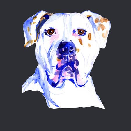 Watercolor hand drawn dog American Bulldog