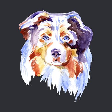 드로잉 개 품종 호주 셰퍼드, 흰색 배경에 초상화 수채화 그림. 손으로 그린 집 애완 동물입니다. 디지털 페인팅. 스톡 콘텐츠
