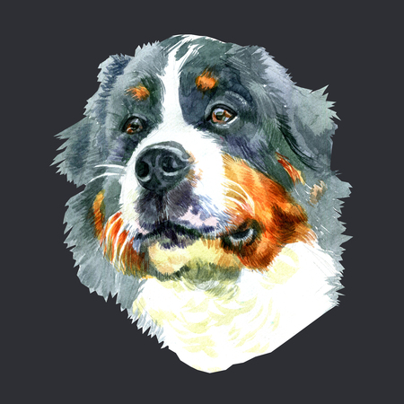 Watercolor closeup portrait of large Moscow Watchdog breed dog isolated on black background.