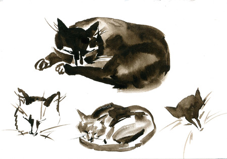 Cute watercolor cats on white background. Sketch set