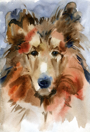 Pedigree dogs painted by hand. Collie portrait. Watercolor illustration.