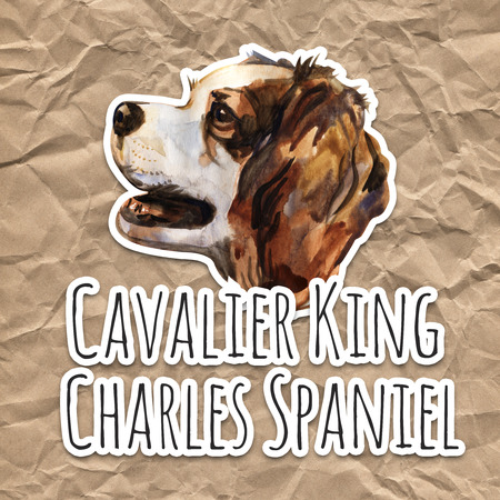 Cavalier king charles spaniel - hand painted, isolated watercolor dog portrait