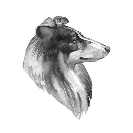 Collie. Portrait dog. Watercolor hand drawn illustration. Standard-Bild