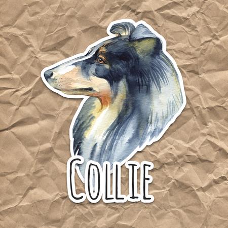 Collie. Portrait dog. Watercolor hand drawn illustration. Stock Photo