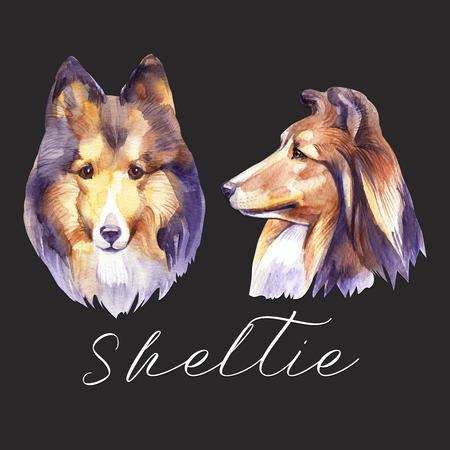 Sheltie. Portrait dog. Watercolor hand drawn illustration. Standard-Bild