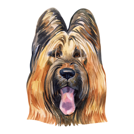 Briard dog breed isolated on white Stock Photo