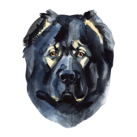 Caucasian shepherd Portrait.