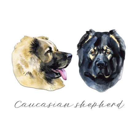 Caucasian shepherd. Portrait. Painting wet watercolor on paper. Naive art. Abstract art. Drawing watercolor on paper.