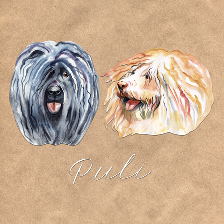 Watercolor Illustrated Portrait of Puli dog. Cute curly face of domestic dog. Stock Photo