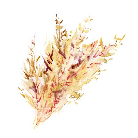 Watercolor spikelets of rye product illustration. Painted isolated natural organic fresh eco food on white background