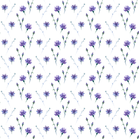 seamless watercolor pattern in light tints with chicory flower, wild plant Stockfoto