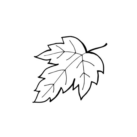 Hand drawn maple leaf outline. Maple leaf in line art style isolated on white background.