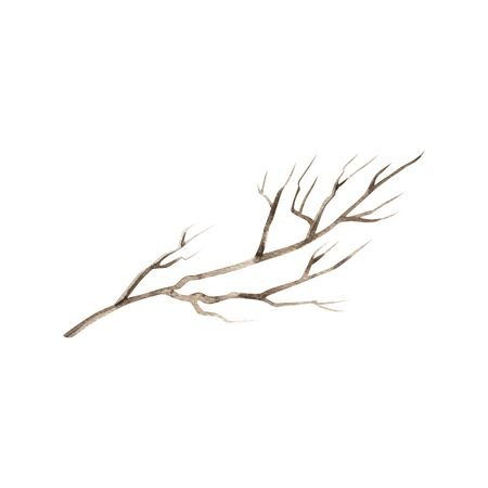 Watercolor painted and inked drawing wood twig, imitation, isolated on white, forest tree, natural tree branch, stick, handmade driftwood forest floor pickups. Rustic watercolor art Standard-Bild - 129131829