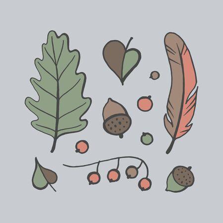 Autumn leaves, acorns and berries set, vector illustration. Illustration