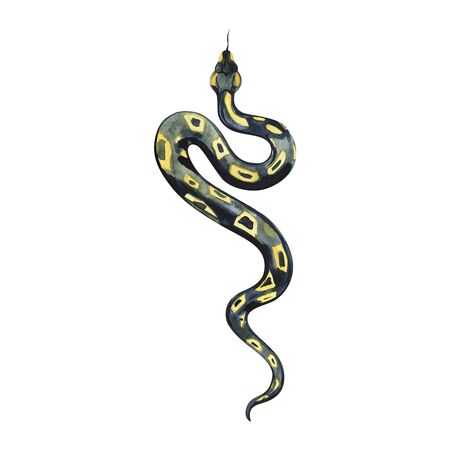 Watercolor painting of a beautiful black yellow snake. Anaconda boa.
