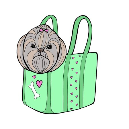 Little glamour tan Shih Tzu dog in the neon mint bag. Vector illustration.