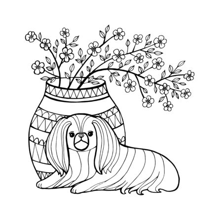 Pekingese. Decorative breed dogs. Coloring book page. Vector illustration. Pekinese. Vector pure-bred