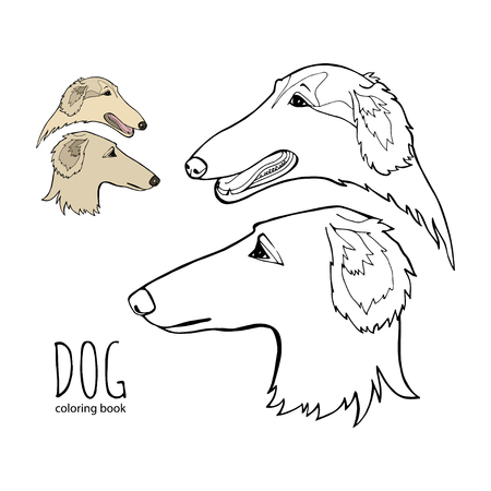 Russian borzoi. Hunting breed dogs. Coloring book page. Vector illustration. Vector logo pure-bred Vettoriali