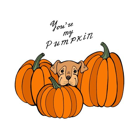 Dog and pumpkin. Autumn time. Vector hand draw illustration. Template for a card or poster.  イラスト・ベクター素材