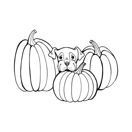 Dog with pumpkin. Coloring book page. Outlines Of Animals In Halloween Pumpkins