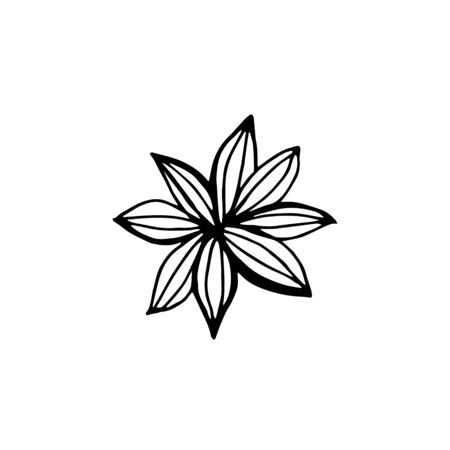 Star anise hand draw on white