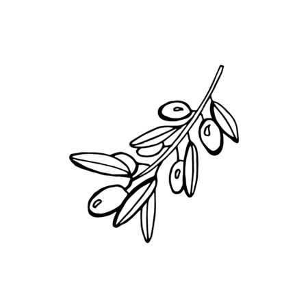 Hand drawn olive branch - vector illustration isolated on white backgrund 写真素材 - 134544603