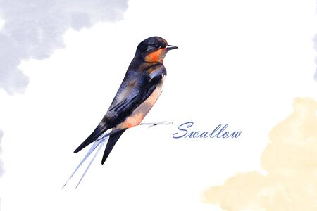 Watercolor drawing bird, swallow. Isolated on white background. Archivio Fotografico
