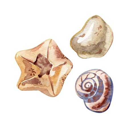 Set of isolated hand drawn seashells. Watercolor illustration.