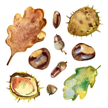 Watercolor illustration of autumn leaves, oak. acorns, chestnuts. Set of isolated objects. 写真素材