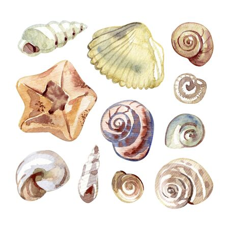 Watercolor set with sea shells and starfish isolated on white