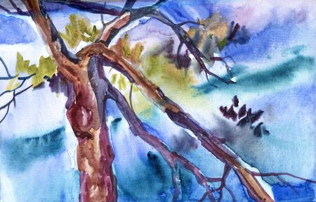 Chinese pine. Japanese watercolor. Watercolor illustration of tree in style sumi-e, go-hua, u-sin.