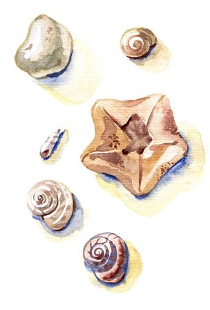 Set of hand drawn watercolor sea shells. Colorful illustrations isolated on white background